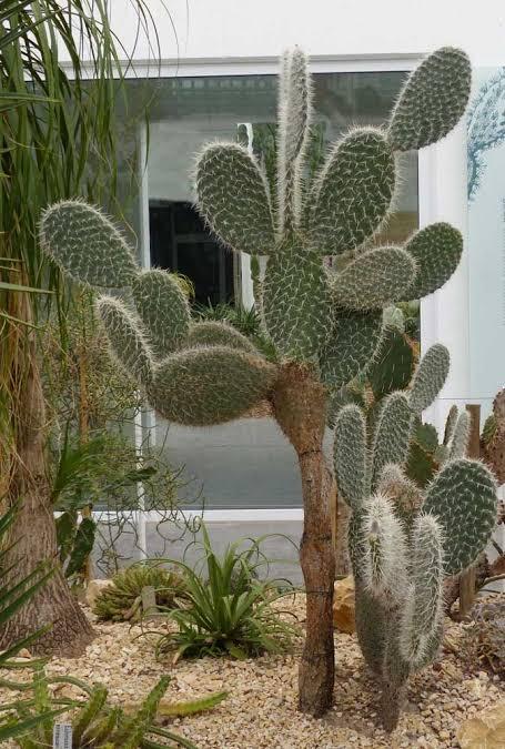 Plantas para jardins resistentes ao sol