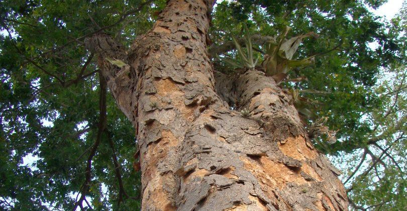 Tipos de árvores
