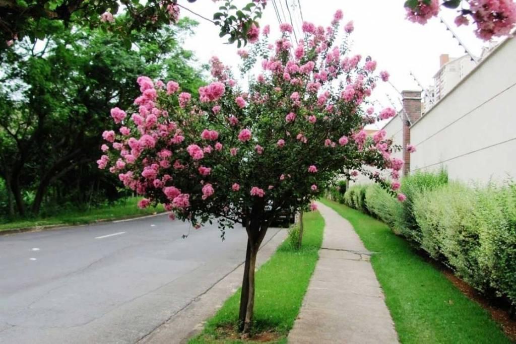 Árvores para calçada