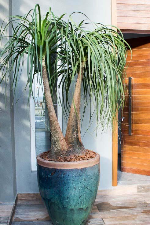 Plantas para vaso grande externo