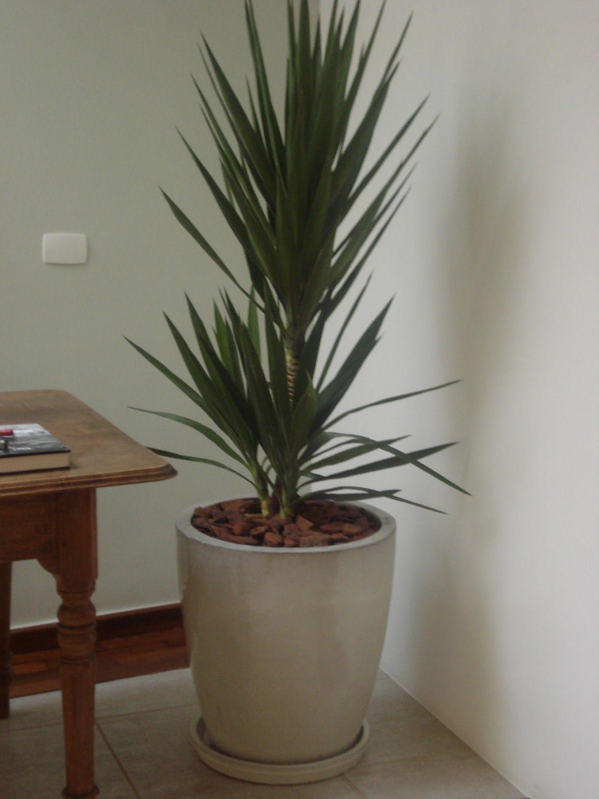Plantas para vaso