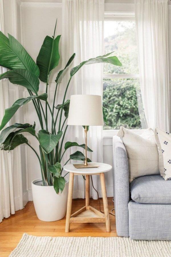 Plantas para vaso na sala
