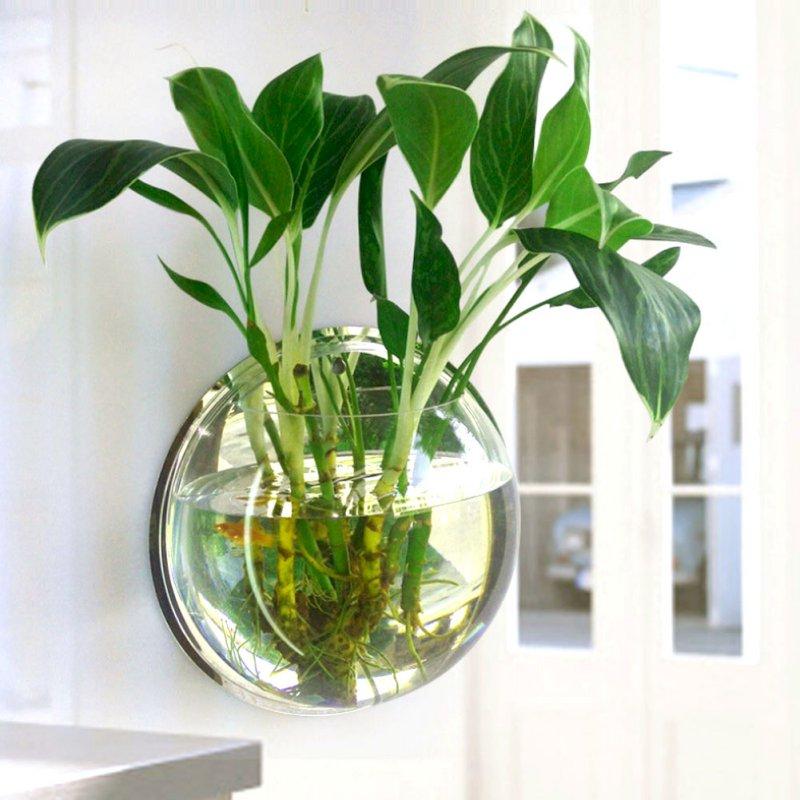 Plantas para vaso de vidro com água