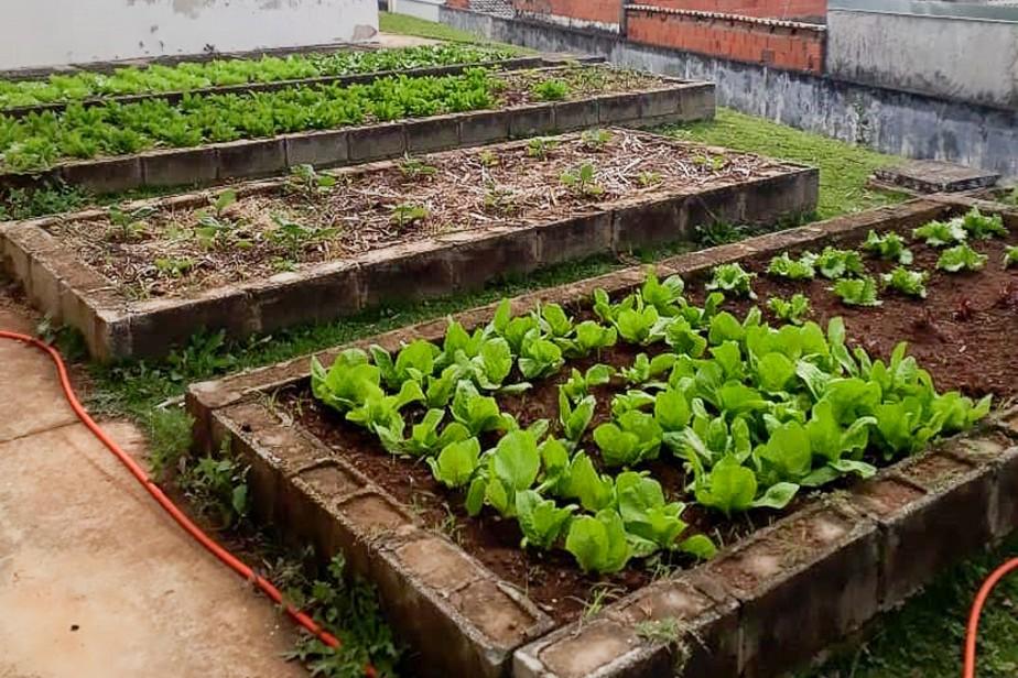 Como fazer uma horta orgânica