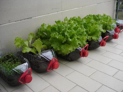 Como fazer uma horta pequena