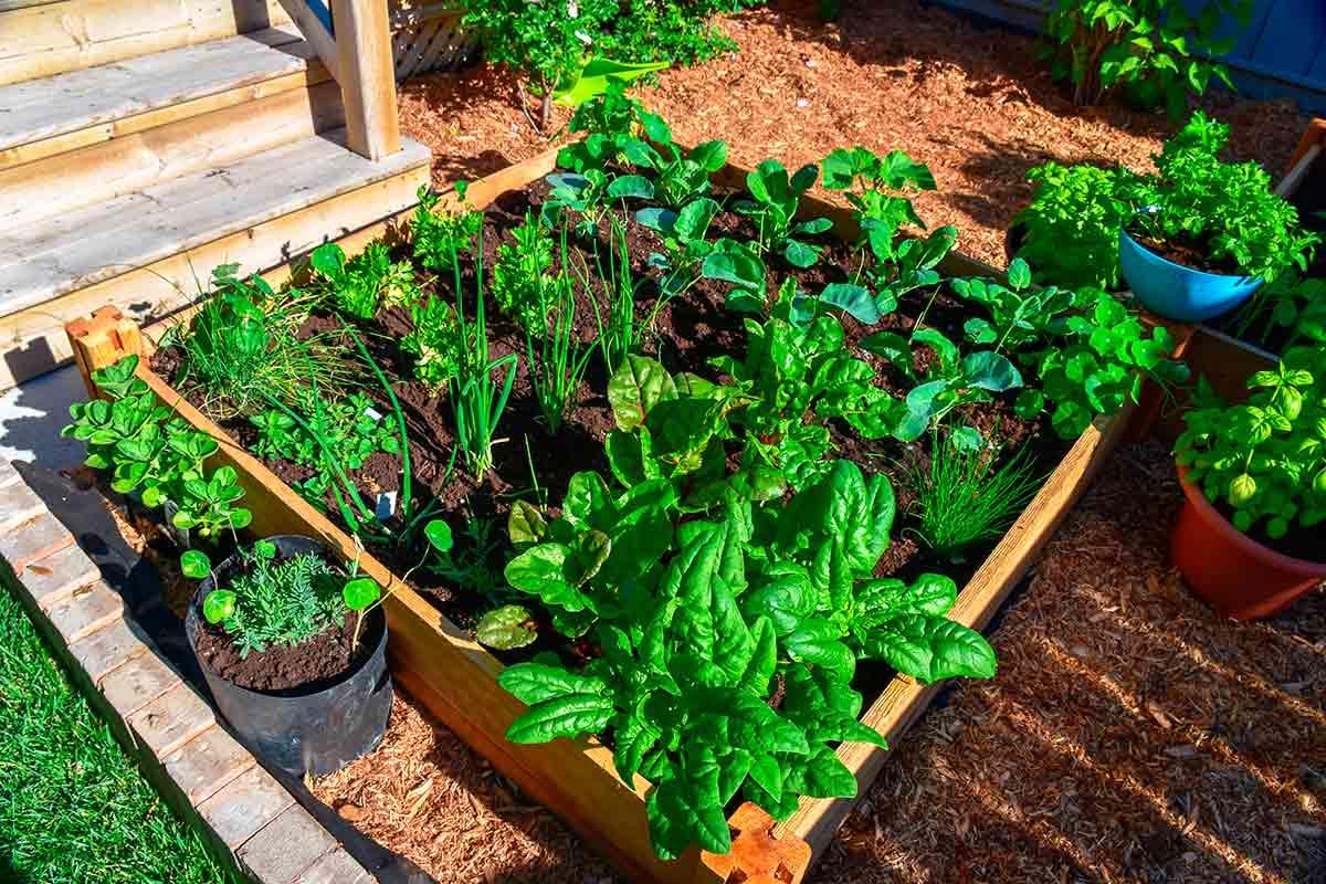 Como fazer uma horta no quintal