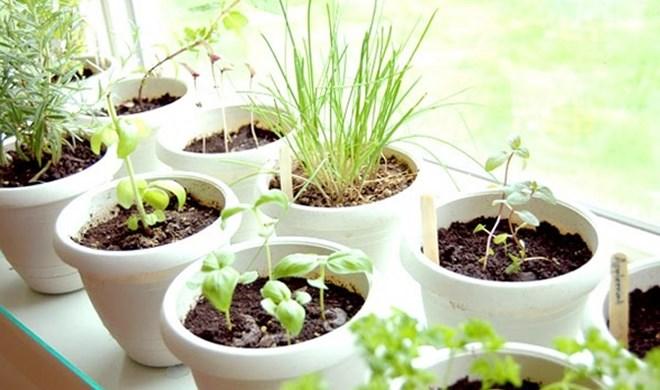 O que plantar na horta?