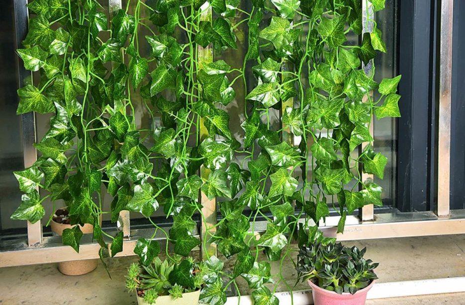 Hera planta