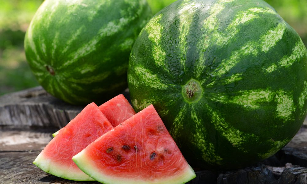 Como plantar melancia