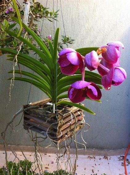 Vasos para orquídea